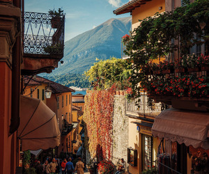 city, flowers, and donde es image