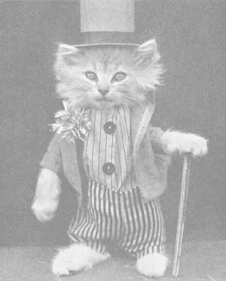 cane, cat, and dandy image