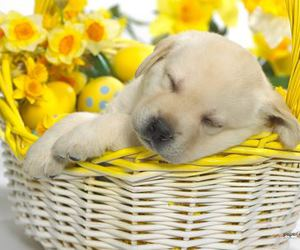 basket, puppy, and yellow image