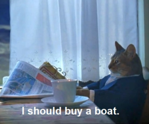 cat, boat, and funny image