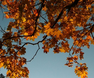 orange, autumn, and maple image