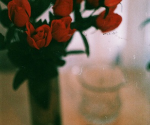 flowers, red, and rose image