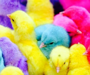easter and cute image