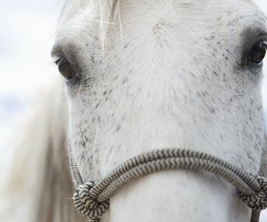 horse, animal, and beautiful image