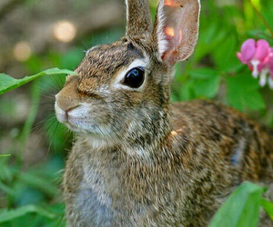 animals, bunny, and easter image