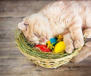 cat, kitten, and easter image