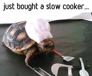 funny, turtle, and animal image
