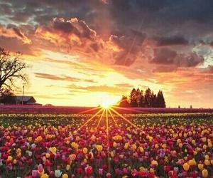 shine, sun, and sundown image