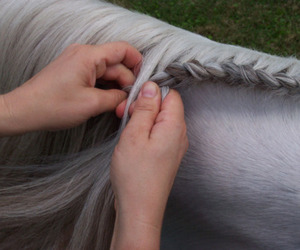 horse, vintage, and braid image