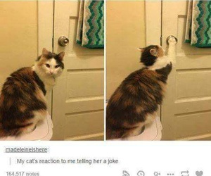 cat, funny, and joke image