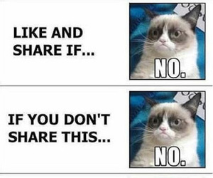 funny, no, and cat image