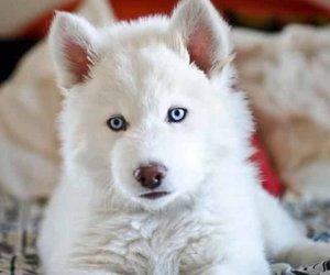 dog, beautiful, and white image