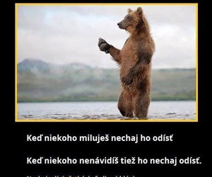 bear, quotes, and citaty image
