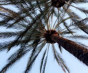 cali, palmtrees, and pretty image