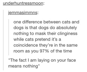 cats, dogs, and face image