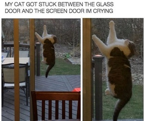 cat, funny, and stuck image
