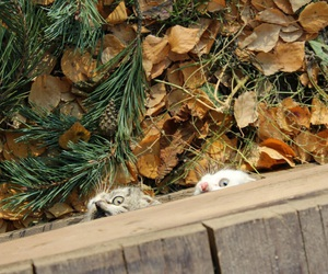 autumn, beautiful, and cats image