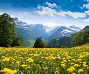 beautiful, earth, and flowers image