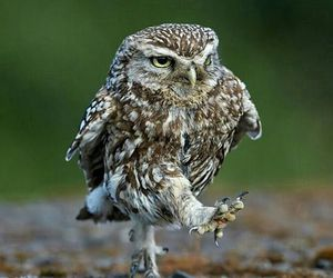owl, animal, and funny image