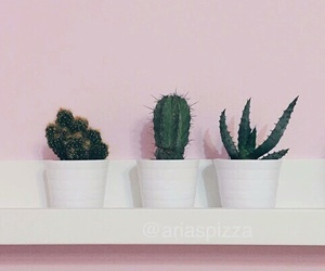 plants, pink, and cactus image