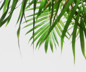 background, palm, and palmtree image