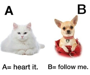 cat, dog, and follow image