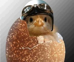 easter and Chick image