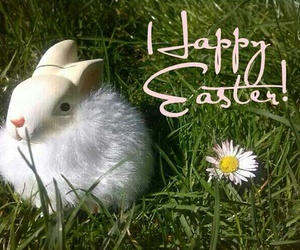 beautiful, bunny, and day image