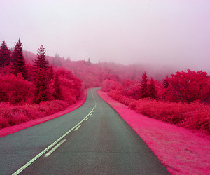 pink, road, and nature image