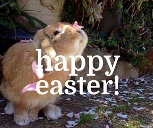 flowers, bunny, and easter image
