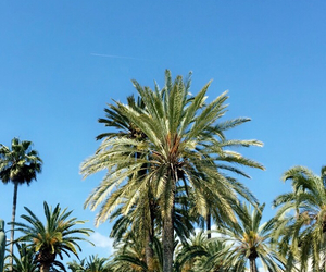 palmtree, summer, and whatever image
