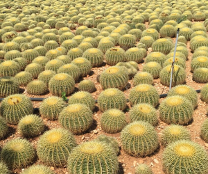 cactus, desert, and green image