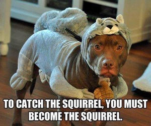 funny, dog, and squirrel image