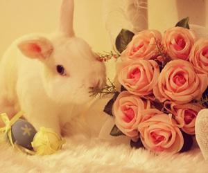 bunny, cutie, and easter image