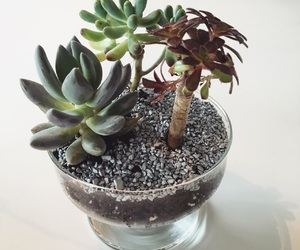 diy, succulents, and terrarium image