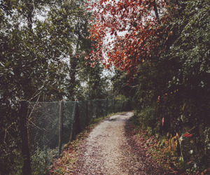indie, vintage, and autumn image
