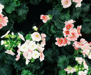 background, colorful, and flower image