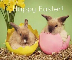 happy easter, cute picture, and Sunday image