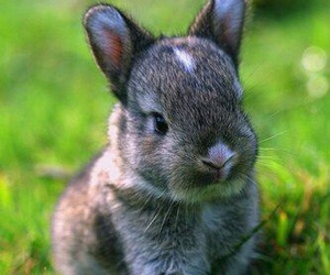 bunny, rabbit, and animal image