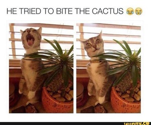 cactus, cat, and funny image
