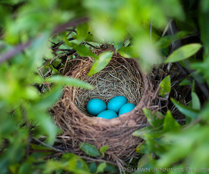 birds, robin, and eggs image