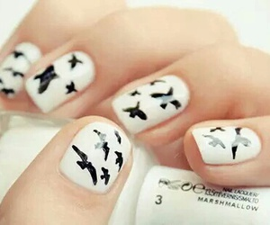 beauty, birds, and nails image