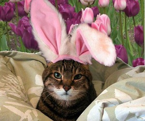 cat, animal, and easter image