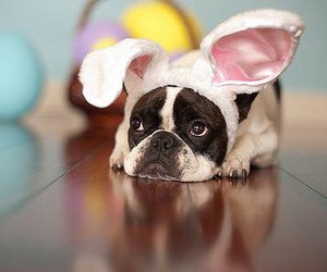 dog, cute, and easter image