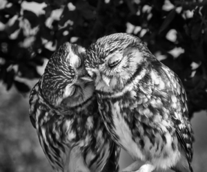love, owl, and animal image