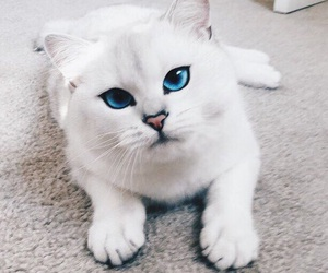 cat, nice, and white image