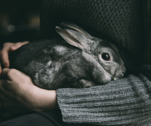 rabbit, animal, and grey image