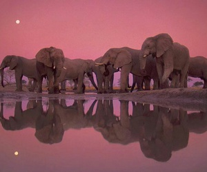 africa, animals, and elephants image