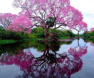 arbre, printemps, and rose image