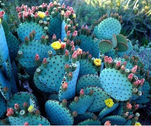 cactus, flowers, and blue image